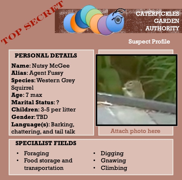 Mock-up of a suspect profile for Nutsy McGee, AKA Agent Fussy from the Caterpickles Garden Authority. The profile tells us that Nutsy is a western grey squirrel, 7 years old max, marital status unknown, with one or more litters of 3-5 kids each, fluent in barking, chattering, and tail talk. Special talents include foraging, food storage and transportation, digging, gnawing, and climbing.