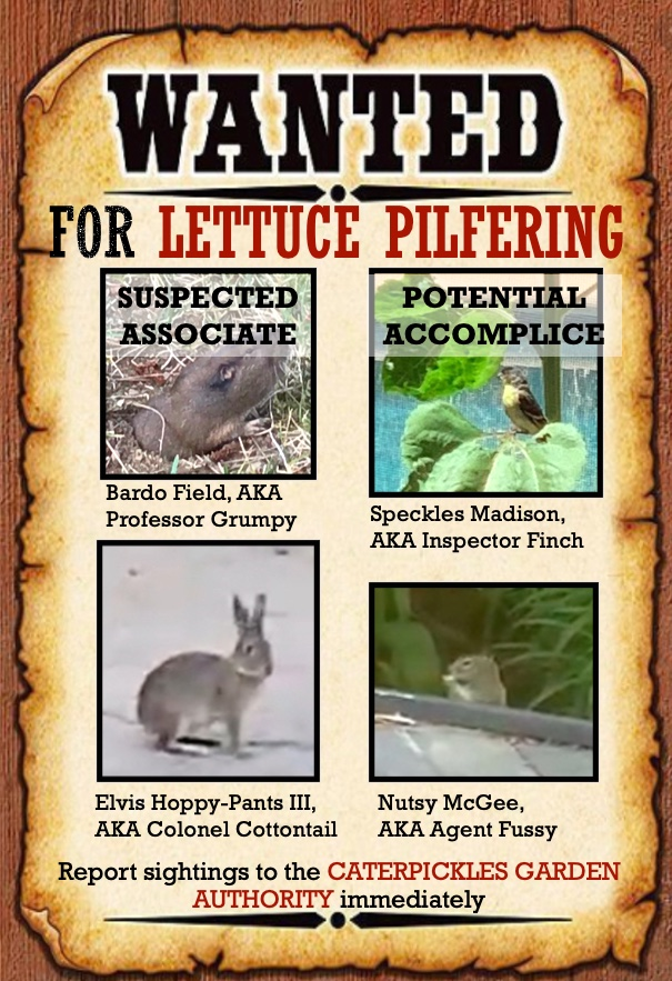 "Image of Wanted Poster which reads: ""Wanted for Lettuce Pilfering. Report any sightings to the Caterpickles Garden Authority immediately."" It contains four photos: a gopher (stamped Suspected Associate), a Lesser Goldfinch (stamped Potential Accomplice), a rabbit, and a squirrel."