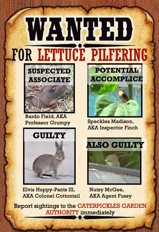 Wanted poster showing photos of a rabbit, a gopher, a squirrel, and a lesser goldfinch. The goldfinch is stamped Potential Accomplice, the gopher Suspected Associate, the Rabbit Guilty, and the Squirrel Also Guilty.