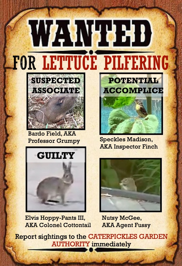 Wanted poster showing photos of a rabbit, a gopher, a squirrel, and a lesser goldfinch. The goldfinch is stamped Potential Accomplice, the gopher Suspected Associate, and the Rabbit Guilty.