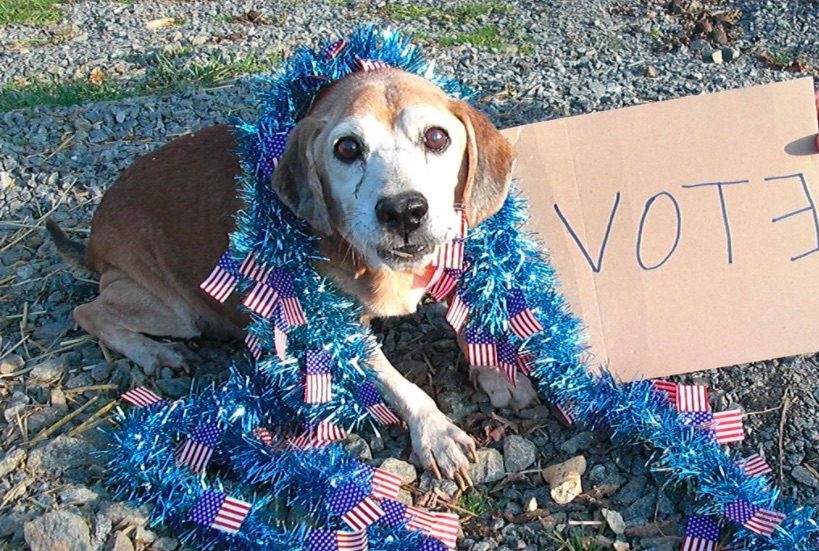 """A dog sits on a rocky sidewalk, draped in blue tinsel with a smattering of small American flags under his paws. Next to him is a cardboard poster that says """"Vote!"""" with a backwards E."""