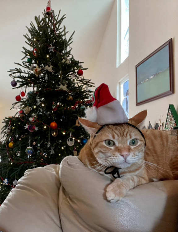 Cat in a santa hat on the back of a couch. The look in his eyes and his flicked back ears make it clear he's trying to decide whose blood to draw first.