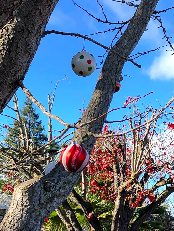 Polka dotted and red and white candy striped Christmas ornaments hang from a tree. The sky is very blue, and the tree limbs very bare.