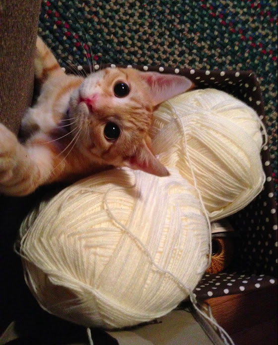 Kitten with giant eyes lashing out at the photographer from the safety of a basket full of yarn.