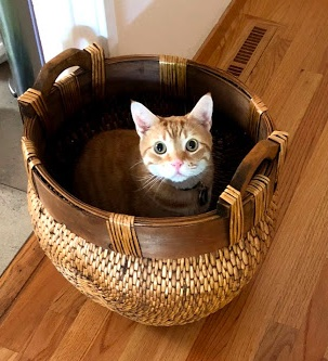 Cat sitting in a woven willow basket. The basket is empty, for the moment.